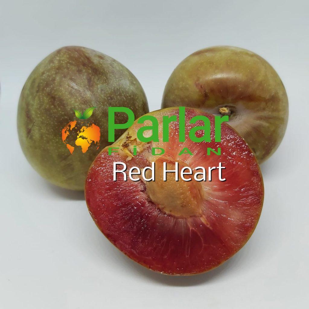 redheart erik